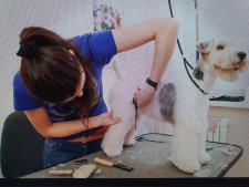 Dog Grooming Business for Sale Essendon Melbourne