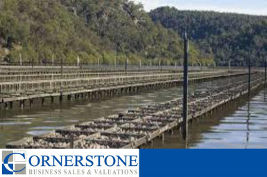 Oyster Farm Business for Sale NSW