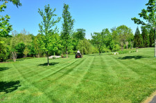 Turf Management and Maintenance Business for Sale Perth