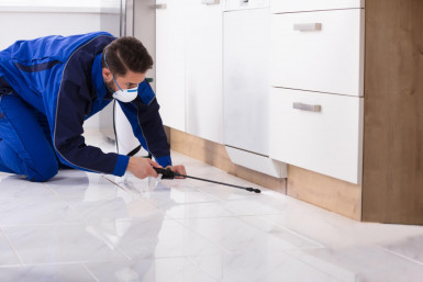 Pest Control Business for Sale Queensland