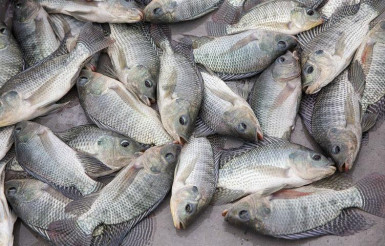 Fresh Fish and Seafood Retail Business for Sale Sydney