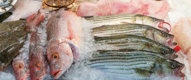 Seafood Shop Business for Sale Sydney
