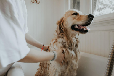 Pet Grooming Salon Business for Sale Sutherland Shire Sydney