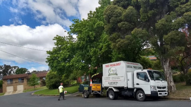 Regional Arboriculture Business for Sale Wodonga VIC