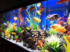 Fish Aquarium and Product   Business  for Sale