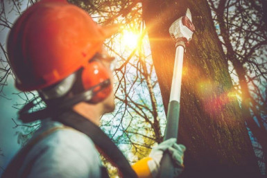 Tree Services  Business  for Sale