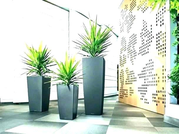 Indoor Plant Hire Service Business for Sale Gold Coast