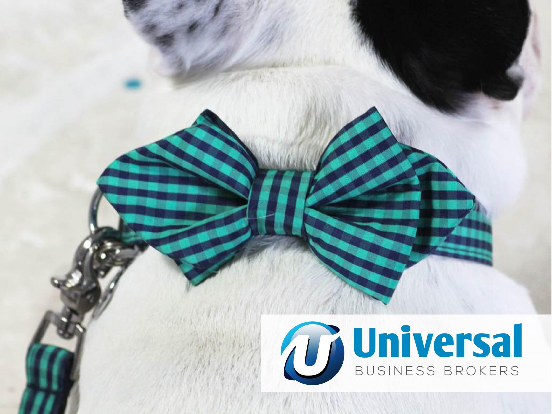 Designer Pet Accessories Business for Sale Sydney