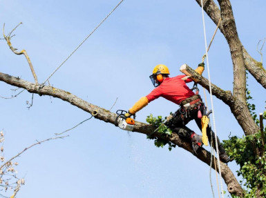Tree Lopping  Business  for Sale