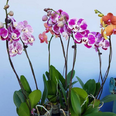 Wholesale Flowers  Business  for Sale