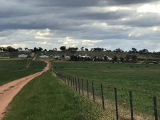 Piggery Business for Sale NSW
